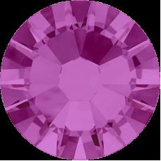 Fuchsia (502)